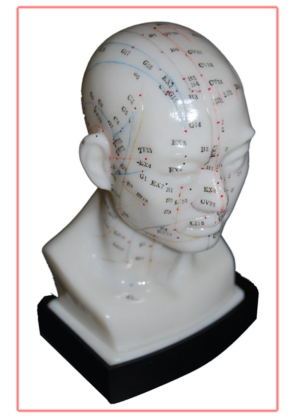 Male Human Acupuncture Model
